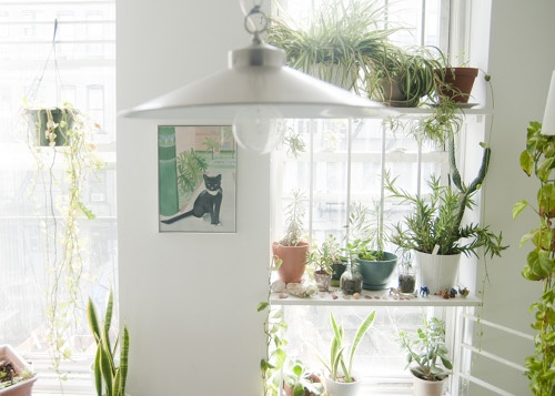 13 ideas para decorar el interior de tu casa con plantas for Ideas para decorar interiores con plantas