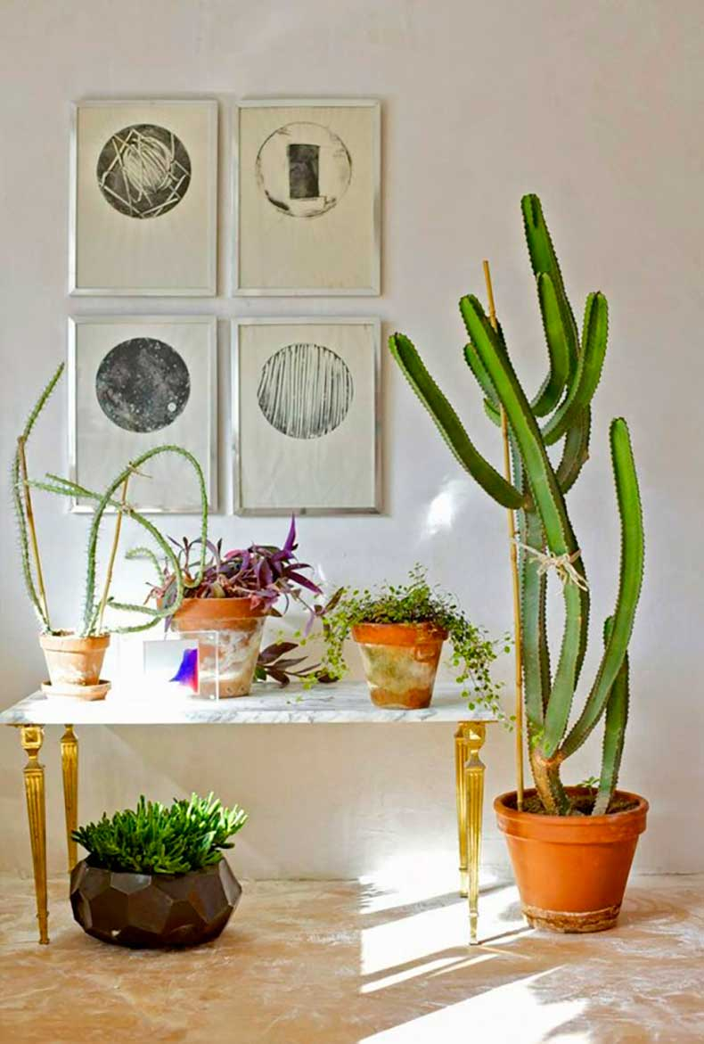 Tendencia en decoraci n los cactus como plantas de for Como decorar interiores