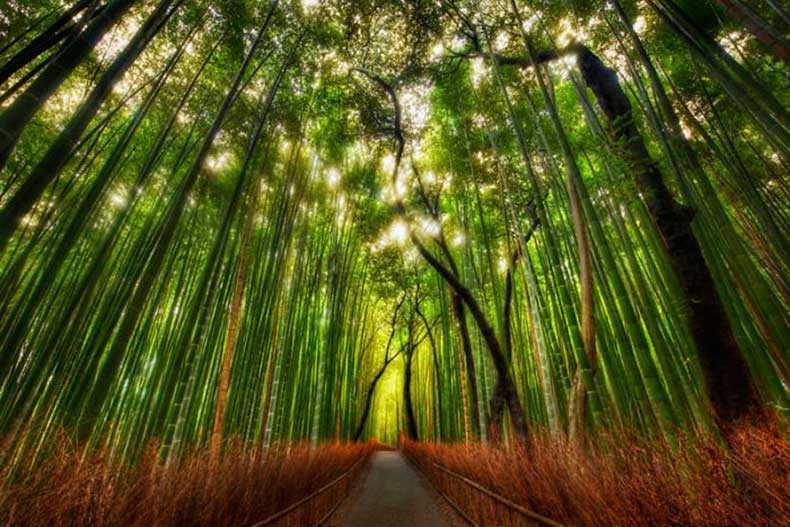 7.-Bamboo-Forest-Japan