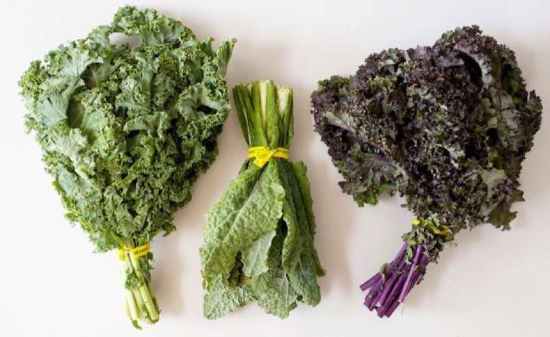 bba642edf03892fd_types-of-kale-preview